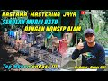 Sekolah Mastering Murai Batu Dengan Konsep Alam Di Purbalingga Hastama Mastering Jaya  Mp3 - Mp4 Download