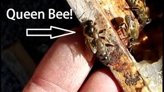 Beekeeping with Cody 2016: Bee Update July