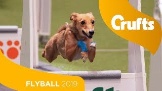 Closest Flyball Final Ever! Aces vs Focus | Crufts 2019