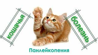 """Панлейкопения """"кошачья чумка"""" опасная болезнь кошек!!!☠🙀 💉⚰"""