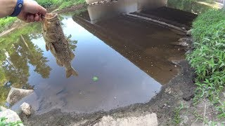 Creek Fishin' the Flippen With GoldFish Lure & Pink Worm