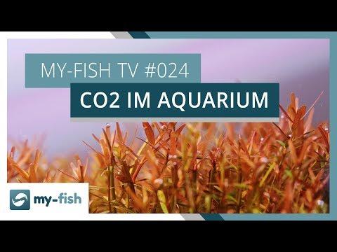 Der wichtigste Pflanzennährstoff im Aquarium: CO2 | my-fish TV