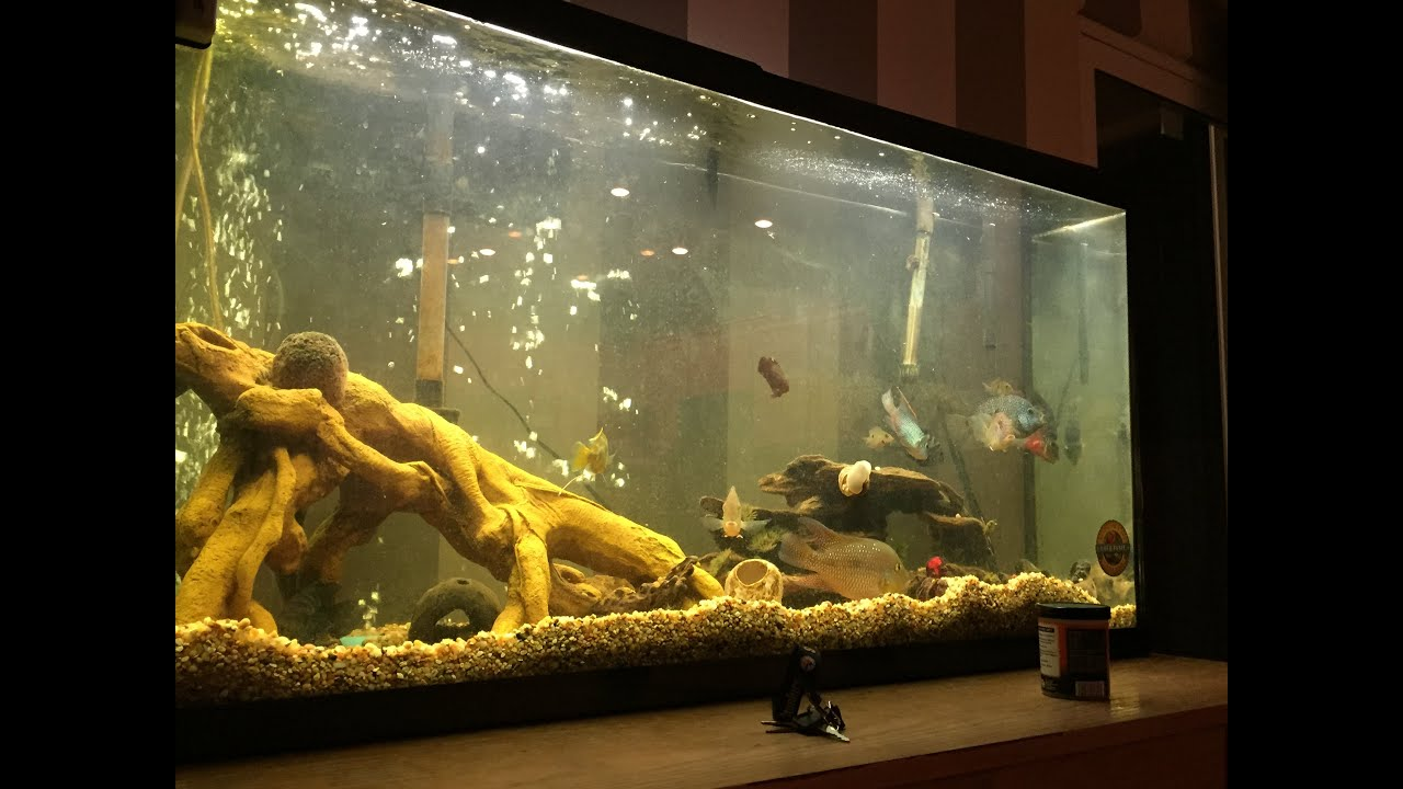 Kinds freshwater aquarium fish - Freshwater Aquarium With All Kinds Of Fish