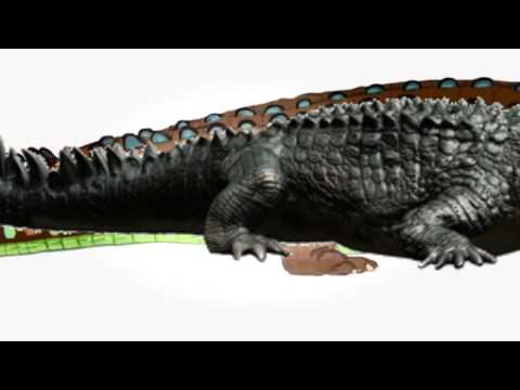 Dinosaur Discoveries Deinosuchus