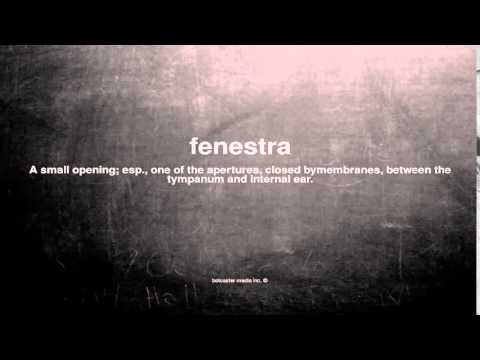 What does fenestra mean