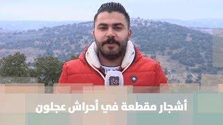 الاعتداء على عدد كبير من الأشجار الحرجية في مناطق مختلفة من محافظة عجلون