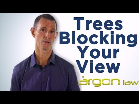 Trees Blocking Your View::New laws provide solution. Sunshine Coast Solicitor- Argon Law