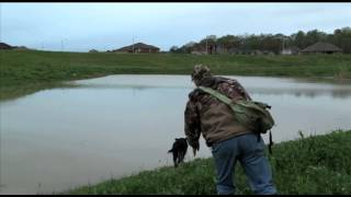 Training The Hunting Retriever: Double Retrieve, Blind And Mark, (part 1).mov