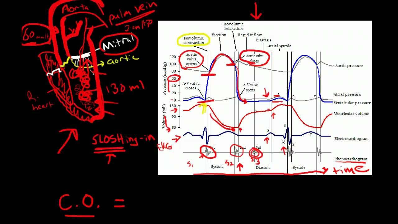 Cardiac Cycle - YouTube