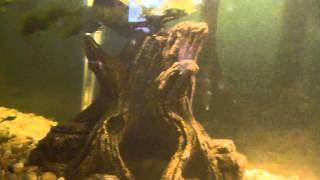 75 gallon mississippi map turtle tank