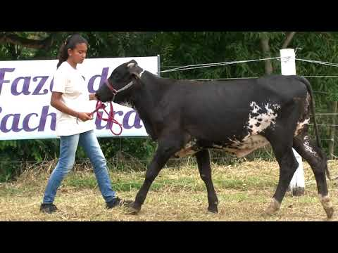 LOTE 24   0591