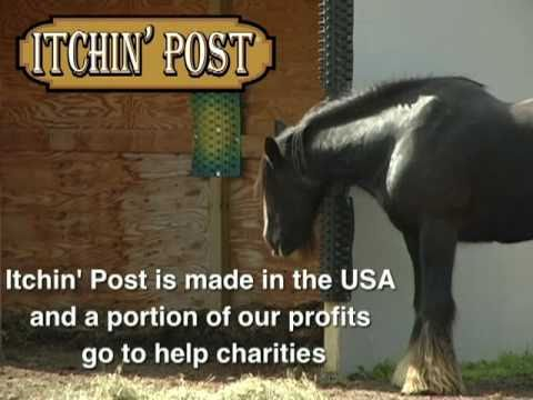 Affordable DIY Equine Scratching Post Solutions   Listen To