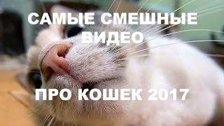 САМЫЕ СМЕШНЫЕ ВИДЕО ПРО КОШЕК 2017 АЖ ДО СЛЁЗ