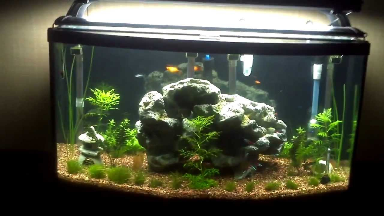 46 gallon bow front aquarium 2012 11 youtube for 38 gallon fish tank