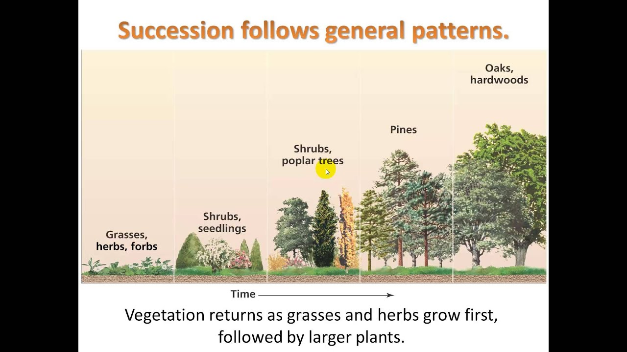 Video 2 4 Ecological Succession