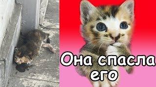 Котенок  Умирал на Улице, Прохожие Проходили Мимо, но Одна Девушка Подобрала Его