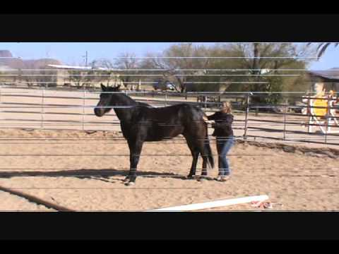 Tucson Equestrian Center Horsewomen Youtube