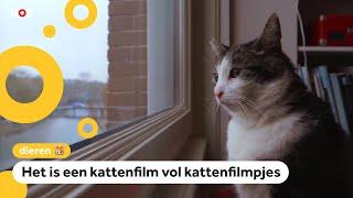 Leona's kat speelt in een nieuwe kattenfilm