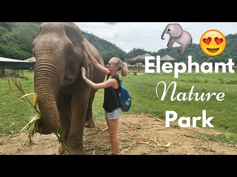 ELEPHANT NATURE PARK IN CHIANG MAI // VLOG
