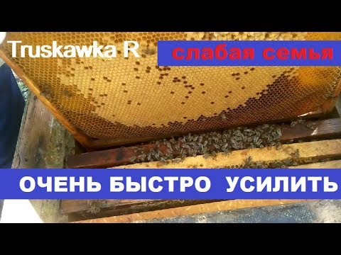 Семьи #пчёл, очень слабые весной. Как за 25-30 дней сделать из них сильную семью.