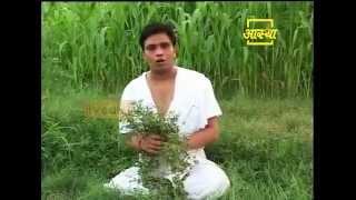 Ayurvedic use  Trailing Eclipta  (Bhringraj) thumbnail