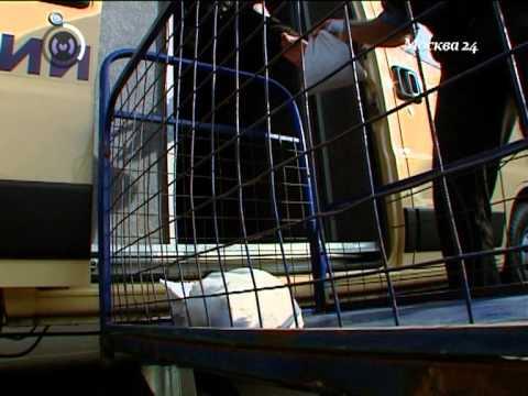 видео: Деньги - это груз 1 (инкассаторы), Екатерина Бурлакова