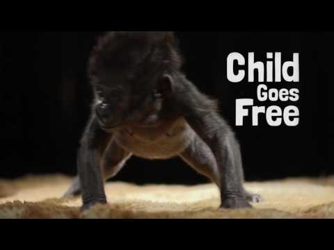Child Goes Free... last one to the Zoo is a gorilla poo!
