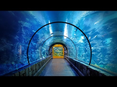 Shark Reef At Mandalay Bay Las Vegas Аквариум в Лас