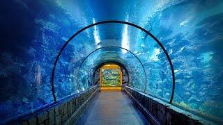 Shark Reef at Mandalay Bay Las Vegas - Аквариум в Лас-Вегасе