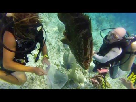 Grouper Eats Lionfish