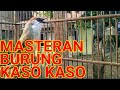 Masteran Burung Kaso Kaso Gacor  Mp3 - Mp4 Download