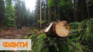 На Волыни активисты начали ловить браконьеров в фотоловушки