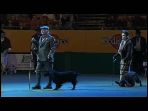 Vulnerable Breeds Parade 2008 - Field Spaniel