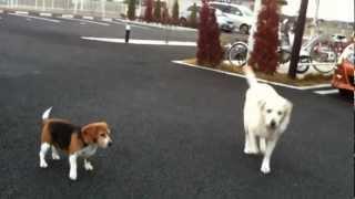 老犬VS若犬(^ω^)