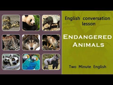 endangering animals essay