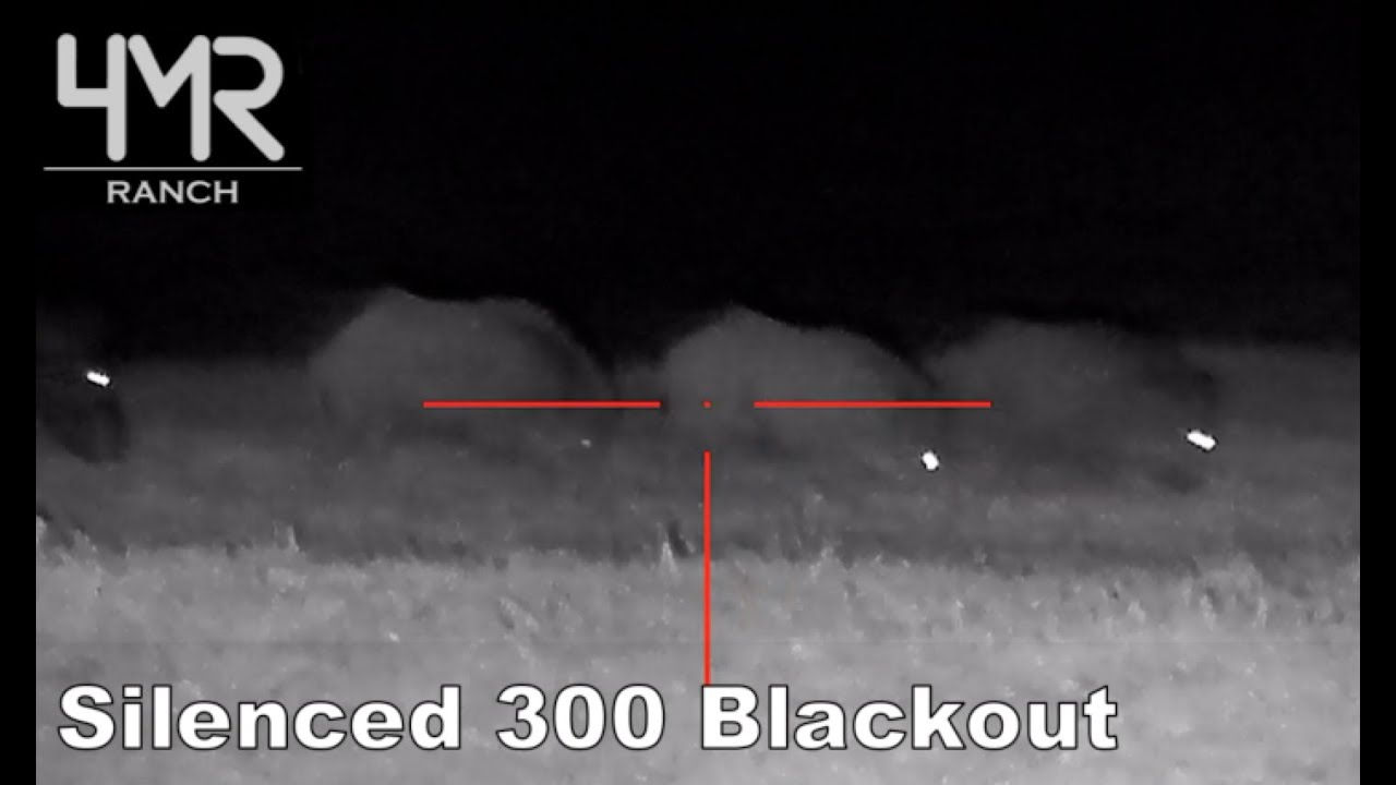 300 Blackout + Night Vision + Silencer VS. Hogs