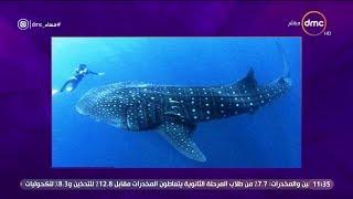 لماذا سمى القرش