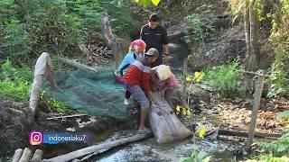 INDONESIAKU | SALO PALAI BERHARAP SEJAHTERA BERTANAM LADA (11/11/19) Part 2