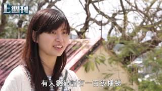 長洲學校路上的櫻花