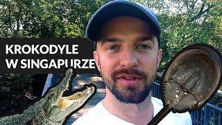 Najdziwniejsze zwierzęta Azji | Park Sungei Buloh w Singapurze
