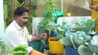 Cultivation of cabbage and cauliflower undertaken by the students