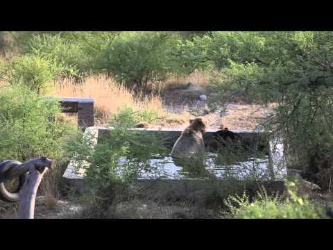 Wildlife Bears in Pakistan