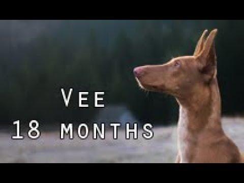 Vee 18 months