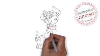 Видео как рисовать собаку  Как нарисовать собаку для начинающих(Как нарисовать собаку карандашом поэтапно знает каждый человек на планете Земля. А вот как правильно рисов..., 2014-08-09T04:43:12.000Z)