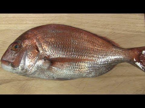 真鯛のさばき方~握りになるまでと潮汁の作り方 寿司屋の仕込み how to fillet