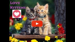 #Funny #Kittens Cats Playing