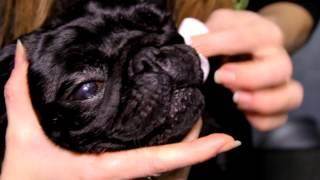 Все О Домашних Животных: СПА-Процедуры Для Собак