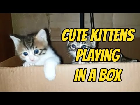 Cute kittens playing in a box │ For cat lovers