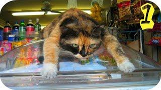 Супер Веселые Кошки / Смешное Видео Про Кошек