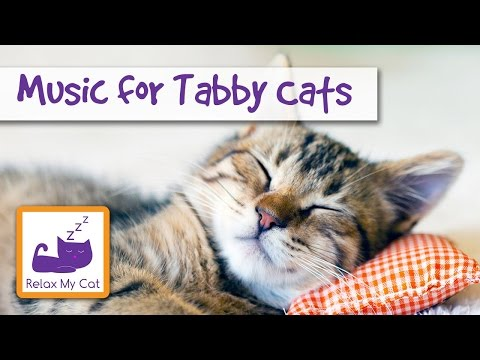 Music for Tabby Cats - Lullabies to Help Your Cat Relax